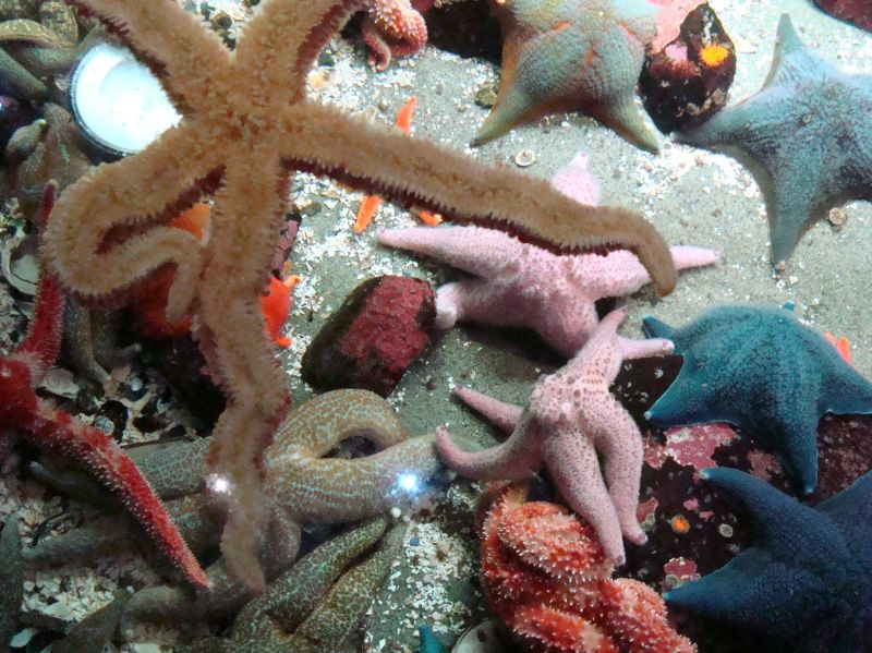 a pile of starfish