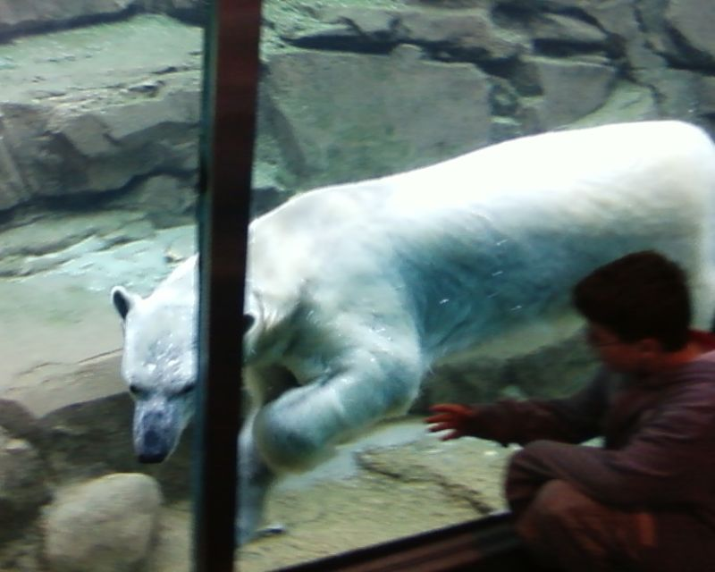 Lousy Phone Photo #2 - Polar Bear
