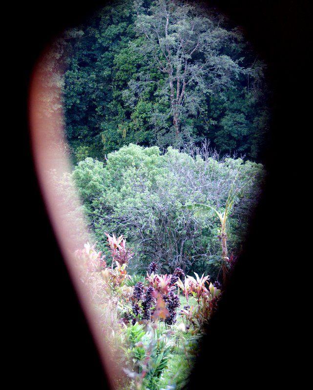 Garden Peekaboo - Costa Rica #9