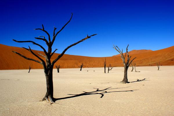 Namibian Scarecrows, Dead Vlei, Namibia