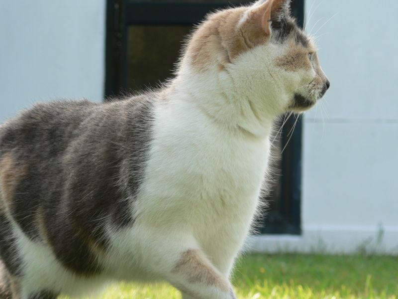 my posing cat angel