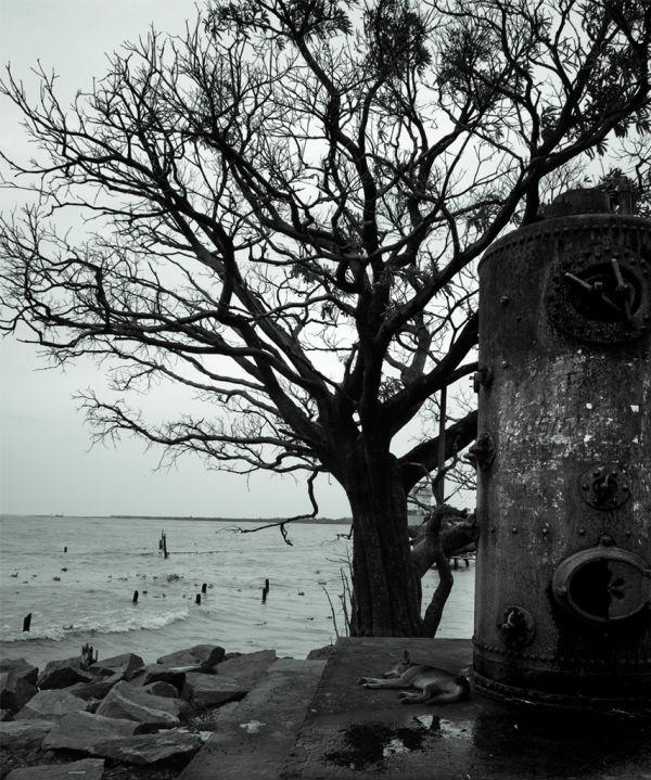near fort kochi beach