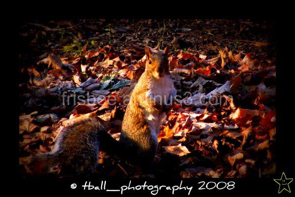 Uno scoiattolo nel parco
