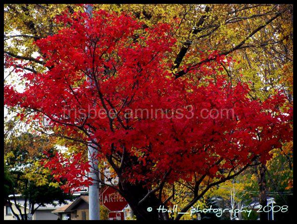 Uno ultimi giorni dell'autunno