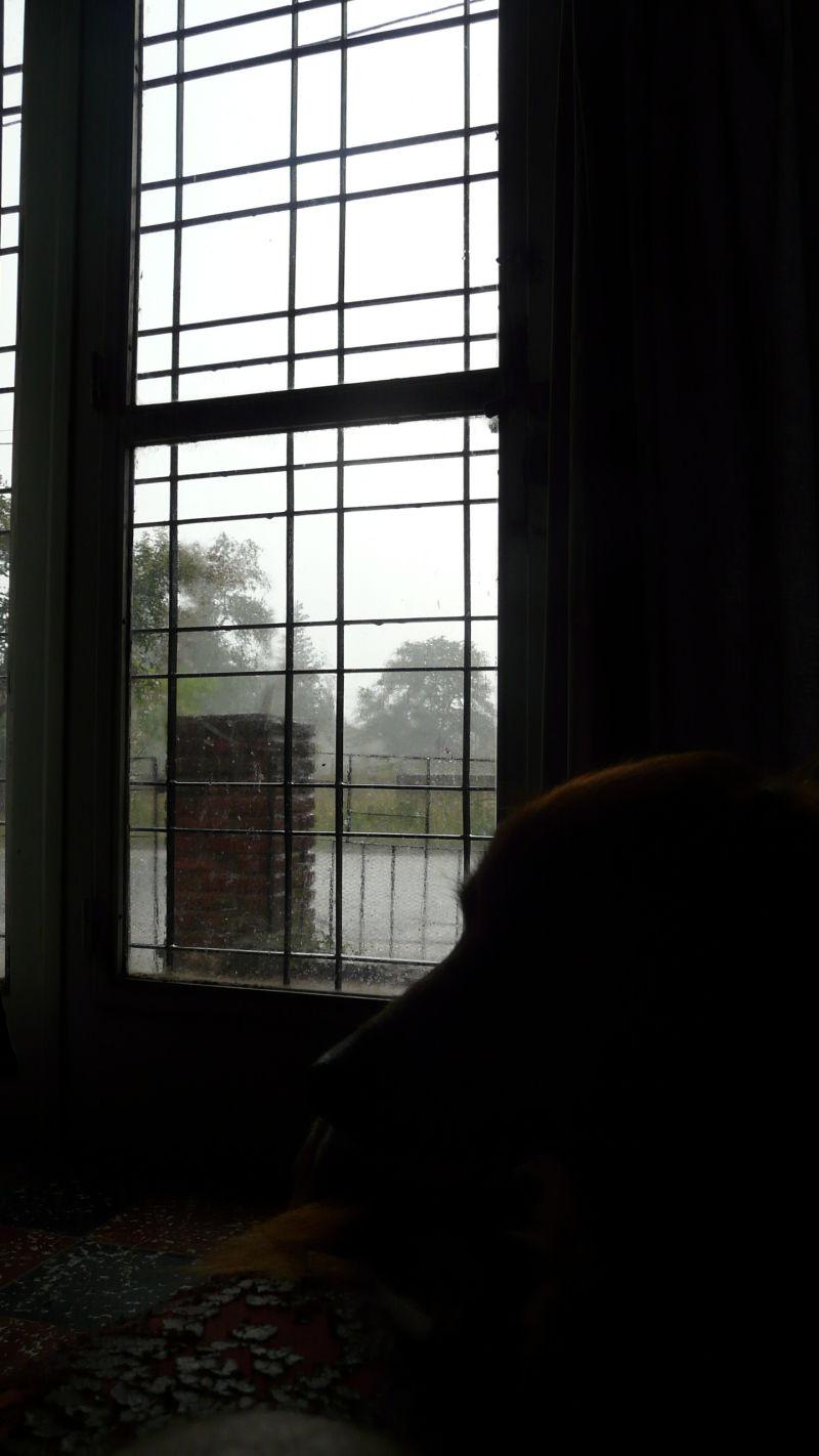 Un día de lluvia...