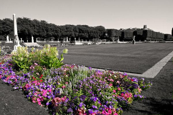 massiif de fleur dans le jardin du luxembourg .