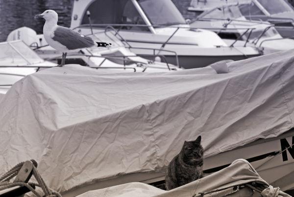 chat et goeland sur un bateau