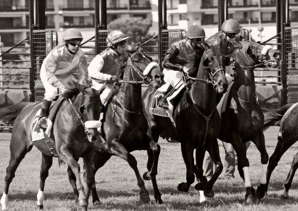 course de chevaux à marseille