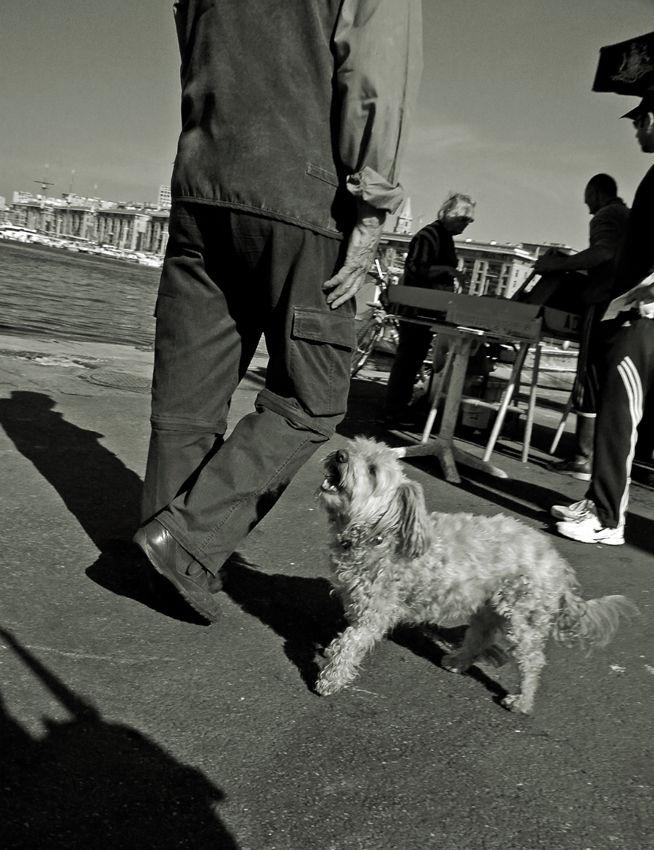 chien sur le vieux port de marseille