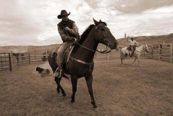 Calf roping, Willow Creek Ranch, Wyoming