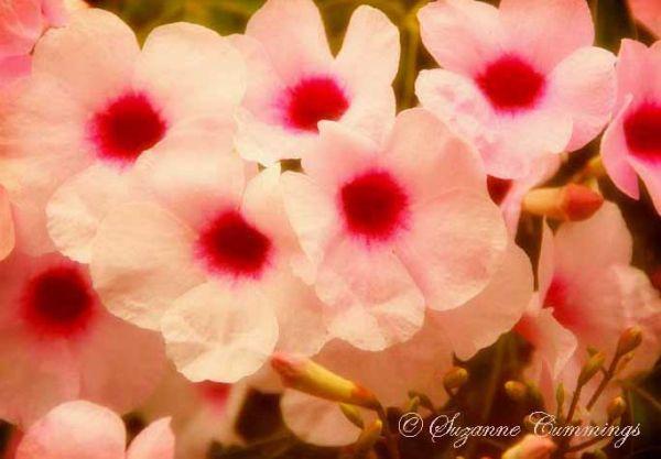 Soft Vintage Flowers