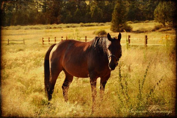 Horse grazing at Big Bear Lake, California