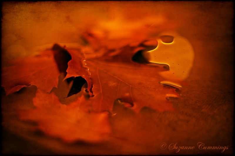 Moon reflection, autumn leaf