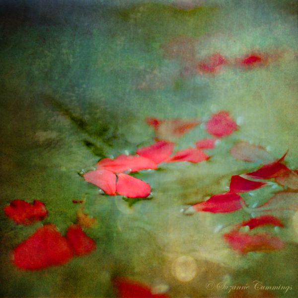Flower petals in water