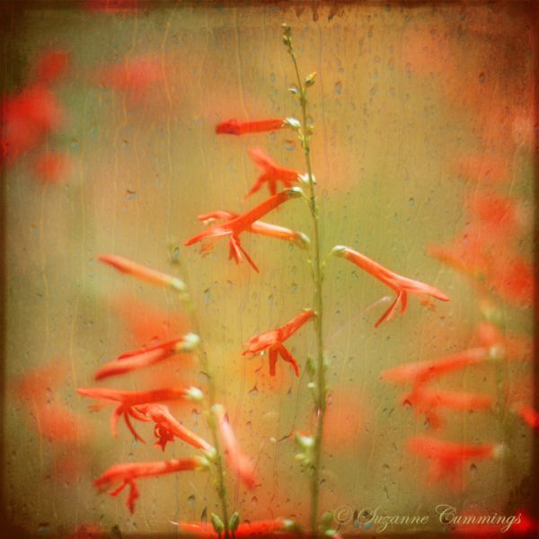 Wildflowers with rain texture