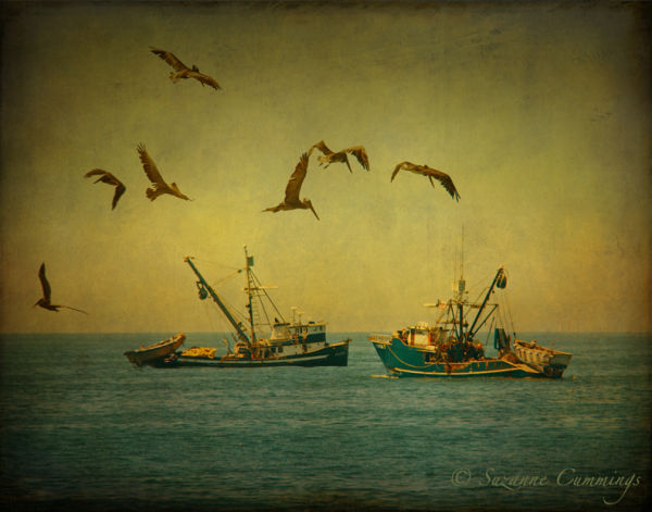 Fishing boat and pelicans