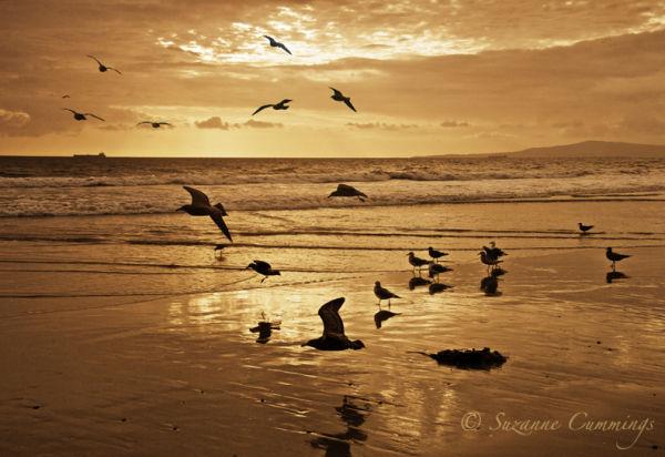 Seagulls, Sunset Beach, California