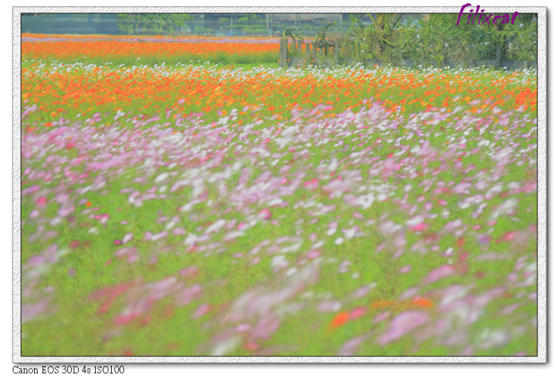 The sea of flower