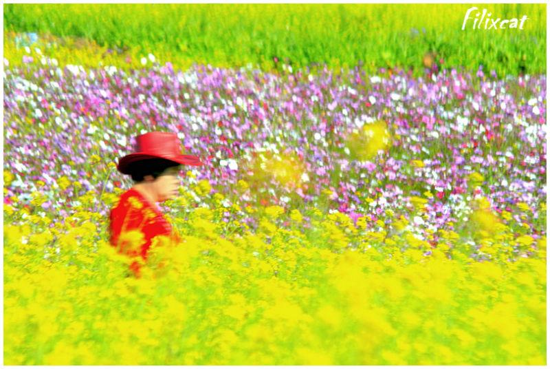 walking in the flower