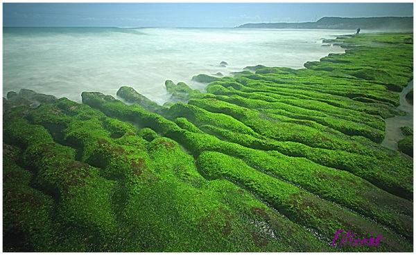 Green sea beach 3