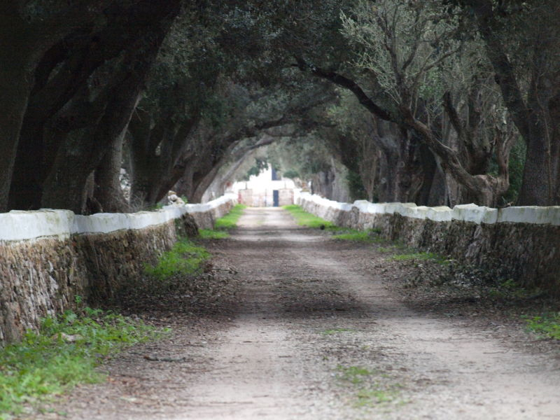 ... camí de Torre Saura