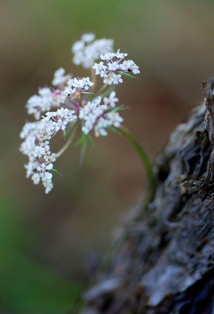 Cep et fleur