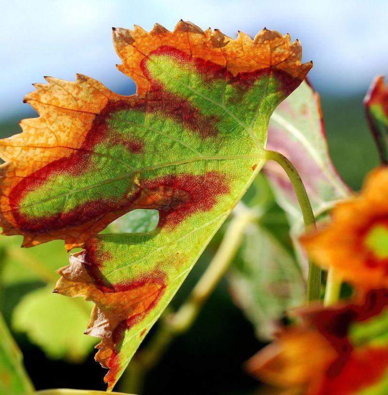 Couleurs d'automne 2