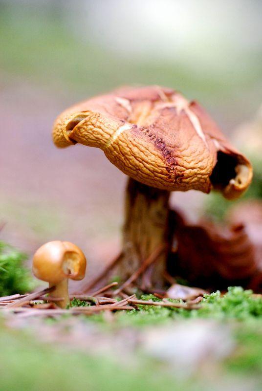 baby mushroom
