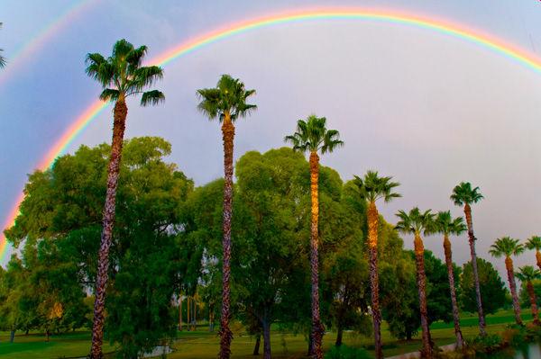 Palms & Rainbows
