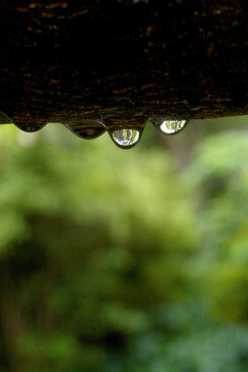 water drop after rain