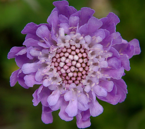 Nanna's flowers #2