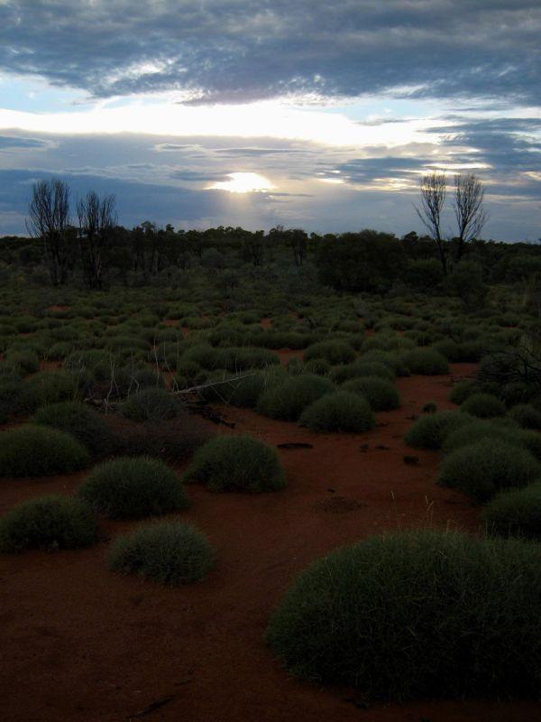 desert #8