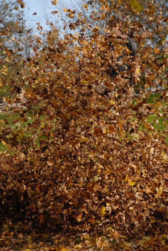The Leaf Blower