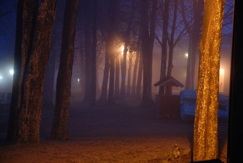 Fog in trees, Cedar Lake, Sturbridge