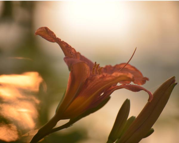 Continued study of light thru plants