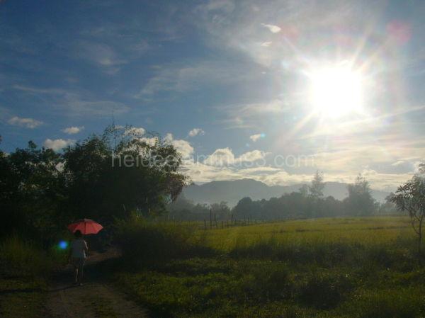 rural, sun shining so bright, pink umbrella