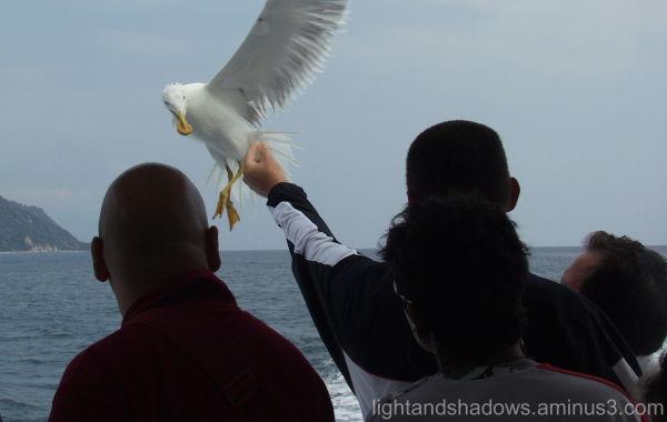 sea-gull greece