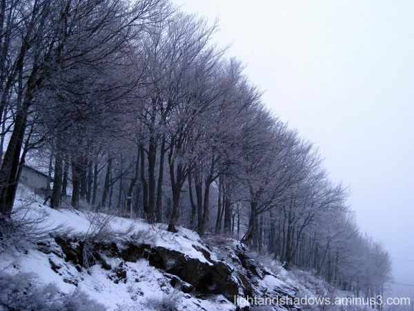 snow trees at Pelio-Thessaly, Greece