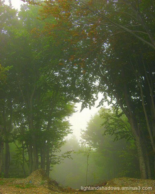 fog at pelio greec
