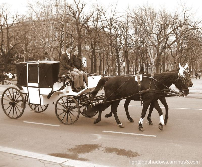 carriage at vienna