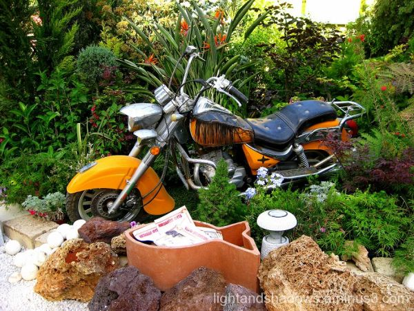 motorcycle and plants