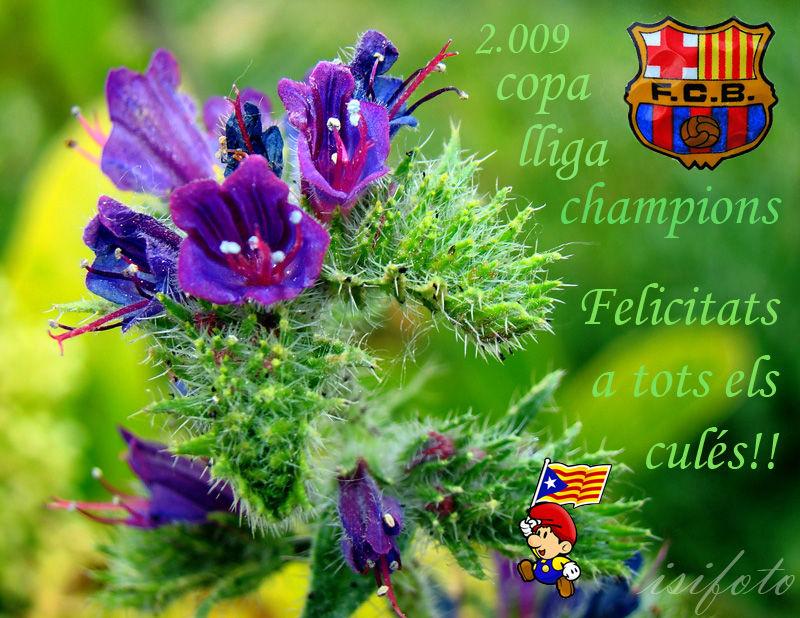 Copa, Lliga i Champions !!!