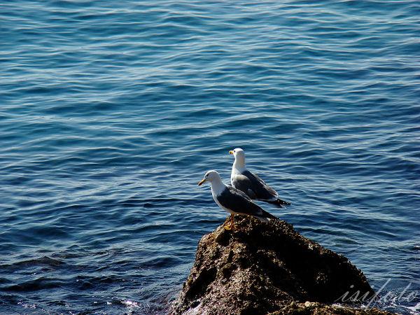 Ametlla de Mar, series 23