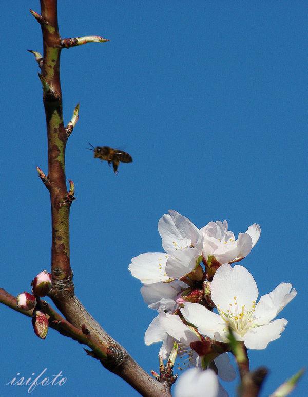 Primavera, series-02