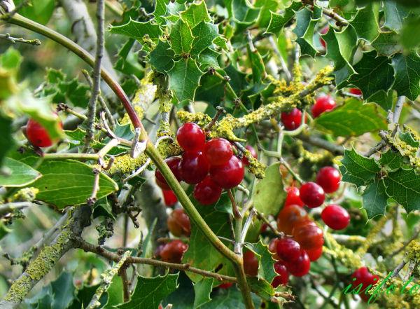Vegetación Parc del Garraf