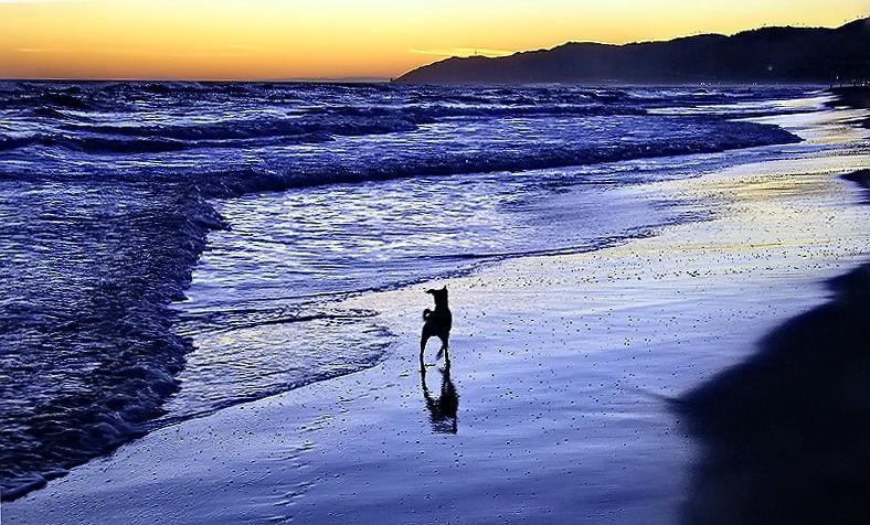 Passeig amb el meu amic a la platja