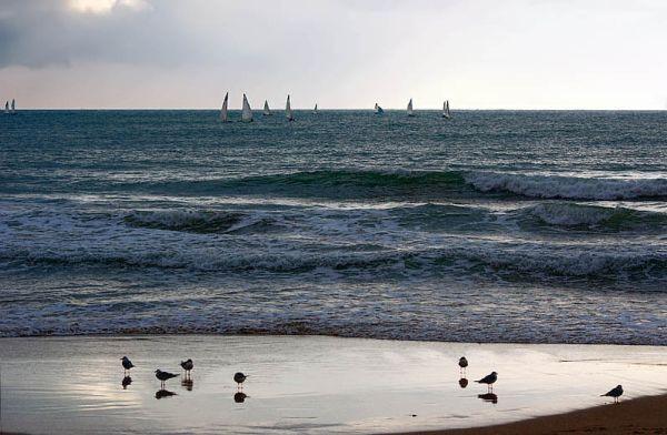 Espectadors regata