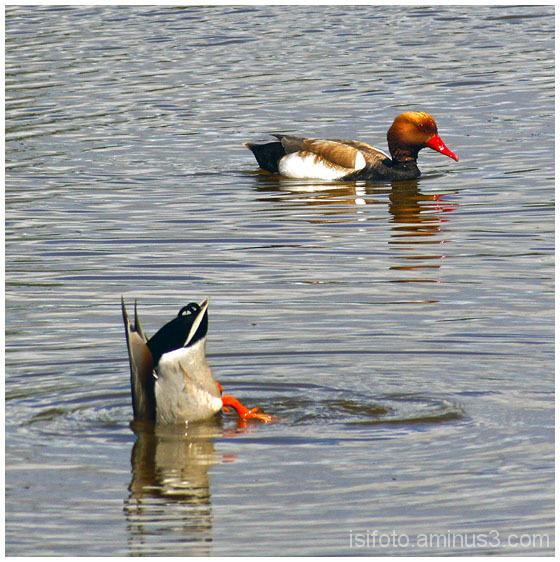 delta llobregat aves