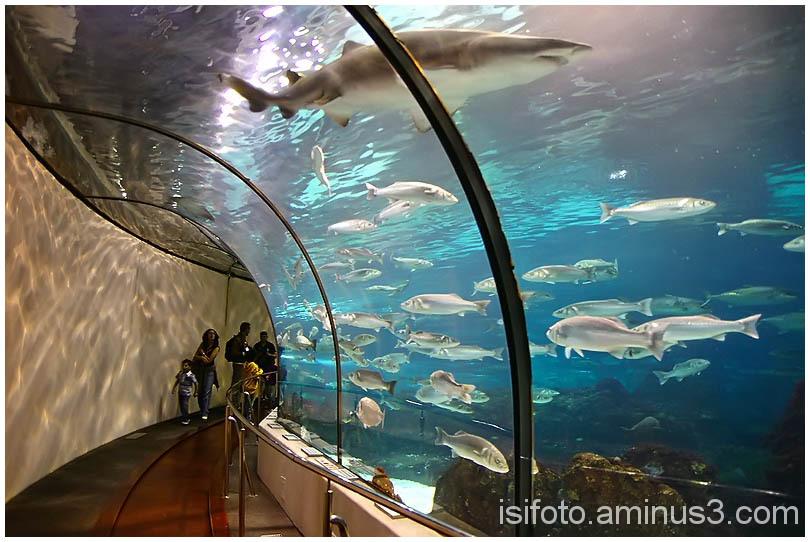 Aquarium Barcelona - 01