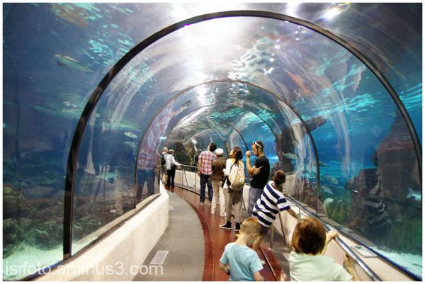 Aquarium Barcelona - 02